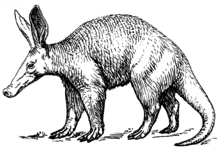 cropped-aardvark2_psf2.png